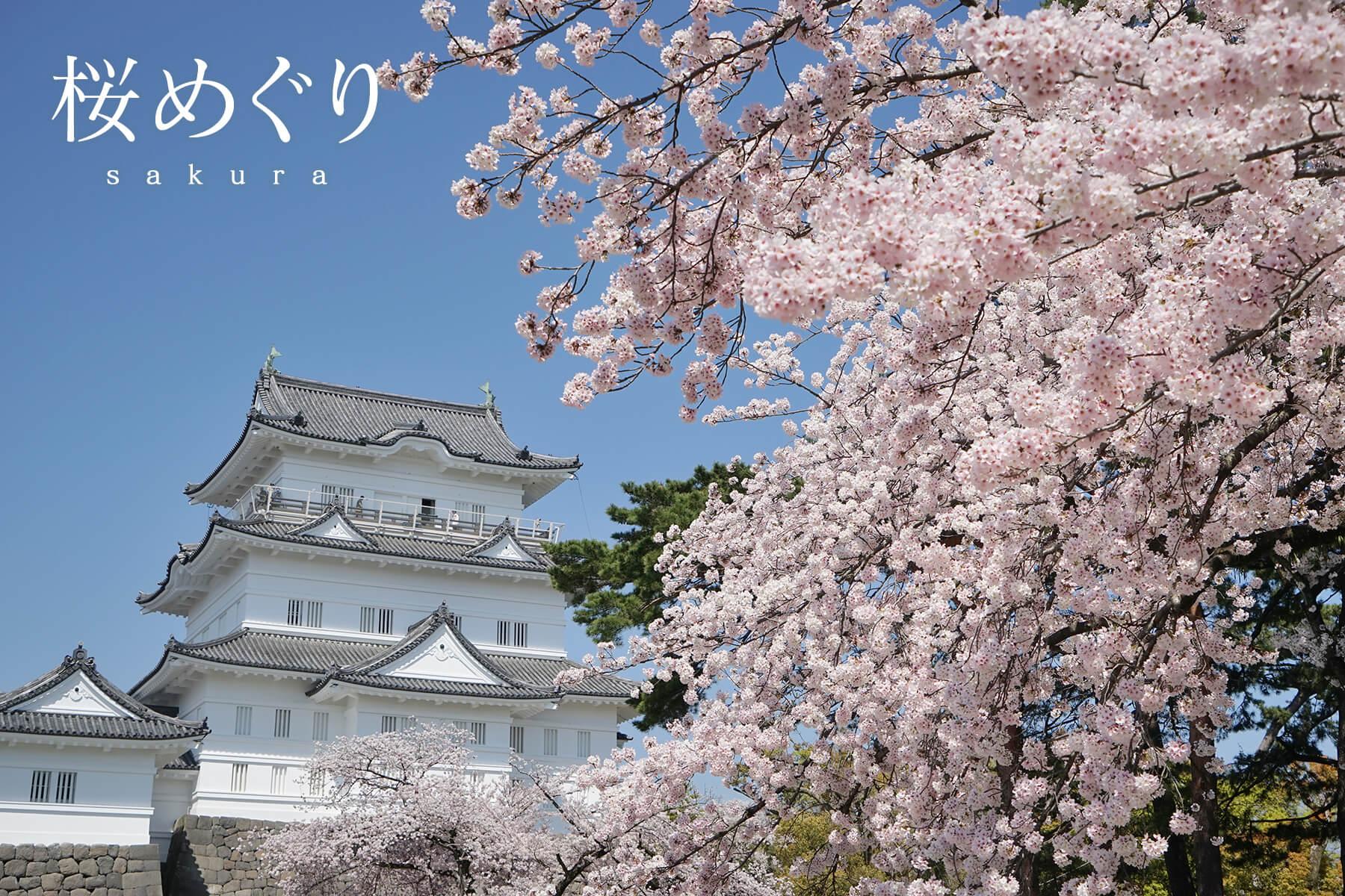 季節別|桜めぐり