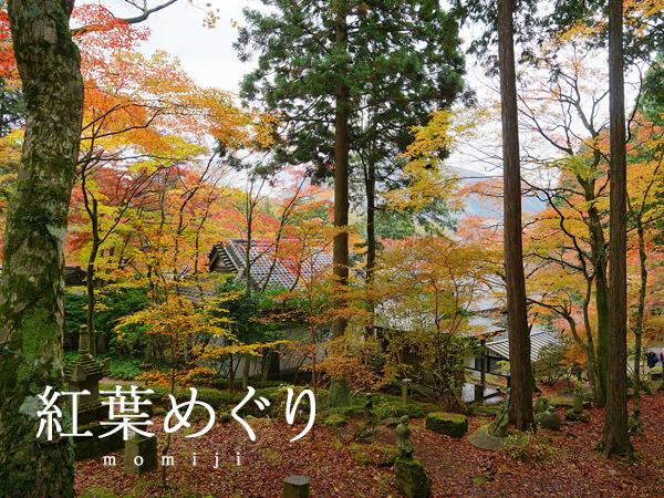 季節別|紅葉